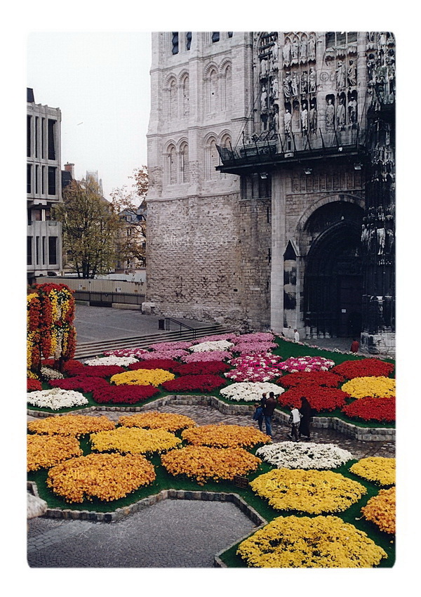 1994_11_00  rouen chrysanthemes 3