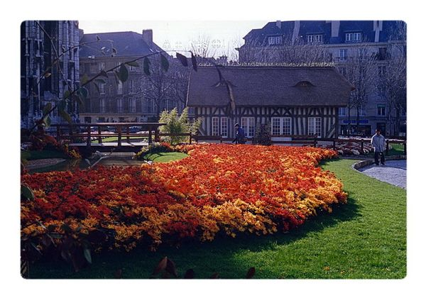 1993_11_00  rouen chrysanthemes 1