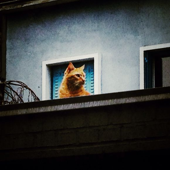 Chat cadre
