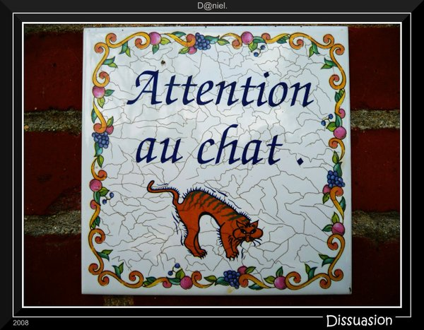 Chat_sauvage